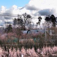 Вид на поселок Опалиха с платформы :: Ольга Говорко