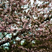 Весна :: Anrijs Slišāns