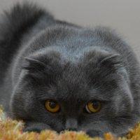 мой зверь :: Светлана Прилуцких
