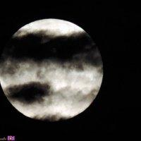 Луна :: Наталья Доценко