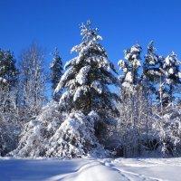 Деревья в снегу :: Сергей