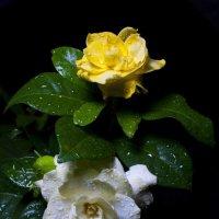 Цветок :: Руслан Веселов