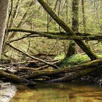 Лесной ручей. :: Валерия Комова