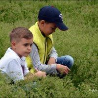 Дети в траве. :: Anna Gornostayeva