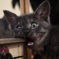 Мой кот Тюбик :: Мария Григорьева