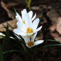 Весна :: Damir Si