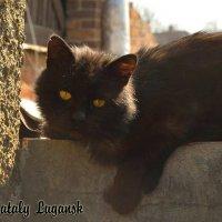Кот по имени Ёжик :: Наталья (ShadeNataly) Мельник