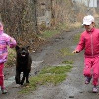 Собачка Лесси и девочки играют наперегонки :: Anatolyi Usynin