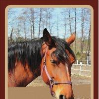 Портрет лошади :: Лидия (naum.lidiya)