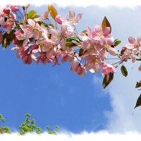 Цветущая веточка китайской яблони. :: Валентина ツ ღ✿ღ