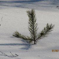 засыпало снегом по макушку :: Валерий A.