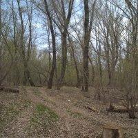 Сакмарский лес в мае. :: Лена
