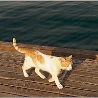 Солнечный кот... :: Кай-8 (Ярослав) Забелин