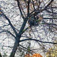Трое на дереве....а собака внизу! (в кадр не вместилась) :: Олег Каплун