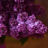 В сиреневых цветах :: Олеся Стоцкая