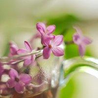 Чай с ароматом сирени :: Олеся Стоцкая