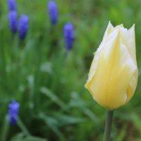 Весной... :: Mariya laimite
