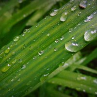 Капли дождя :: Станислав Любимов
