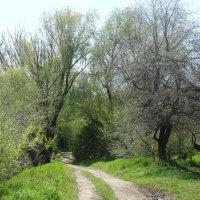 Дорога по весне... :: Тамара (st.tamara)