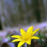 цветок :: Александр Горохов