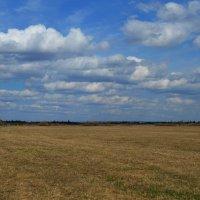 Весеннее поле :: Вера Андреева