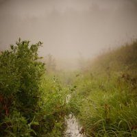 туман :: Виктория Виноградова