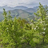 Весна в Восточном Крыму :: Игорь Кузьмин