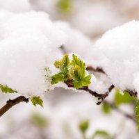 бывает, зима возвращается :: Татьяна Исаева-Каштанова
