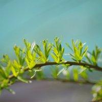 Весна пришла :: Andrad59 -----