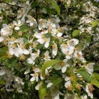 Майские цветы.... :: Mihail Chiriac