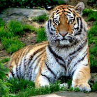 Мой добрый и ласковый зверь :: Alexander Andronik