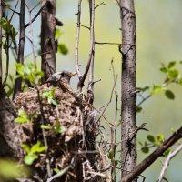 Птичка-невеличка в гнездышке :: Длинный Кот