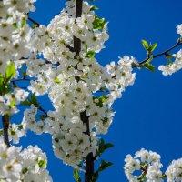 Дыхание весны... :: Алексей Бортновский