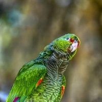 Попугай зеленый :: Вячеслав Мишин