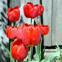 Как он красив- тот пламенный цветок! :: Валентина ツ ღ✿ღ