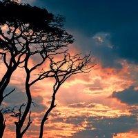 Закат с птицей :: Сергей Клевцов