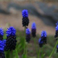 Ботанический сад 07.05. :: Полина