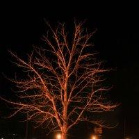 дерево ночью :: Ангелина К