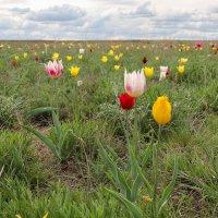 Цветы весны :: Александр Никишков