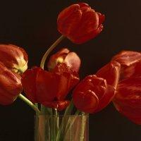 Красные на черном :: Ирина Петрова