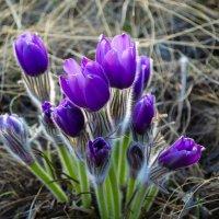 Весна :: Татьяна Гринчук