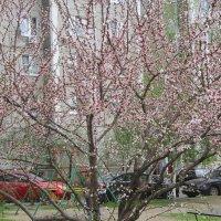 Весна - 2015 :: Irina Gizhdeu