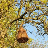 *Гнездо* :: Юлiя :))
