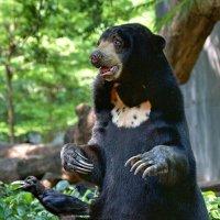 Реинкарнация Фредди Крюгера в Малайского медведя :: Евгений Печенин