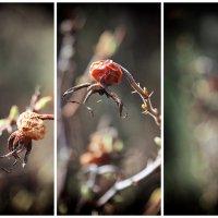 истории старого сада :: Эльмира Суворова