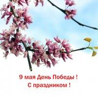 Декоративный миндаль :: Nik Зонов