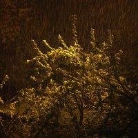 майский снег :: Натали Акшинцева