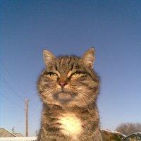 кошка Самуэелла :: Айса Манбусынова