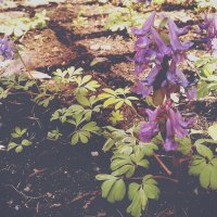 Цветы :: Kira Kredova
