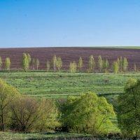 Весна :: Андрей Студеникин